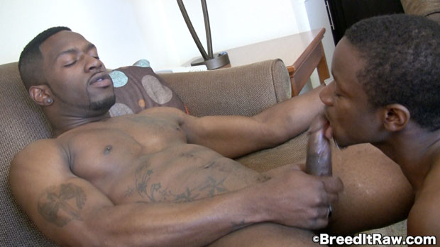 Watch Addiction and Shawdy Black have bareback sex at Breed It Raw
